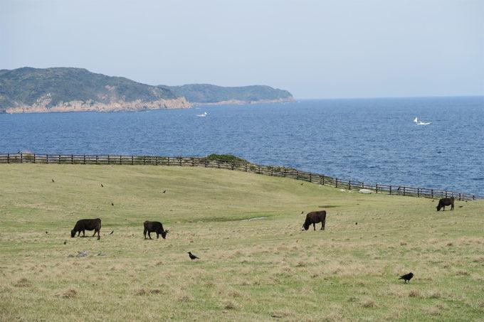 26_海の見える牧場なのです