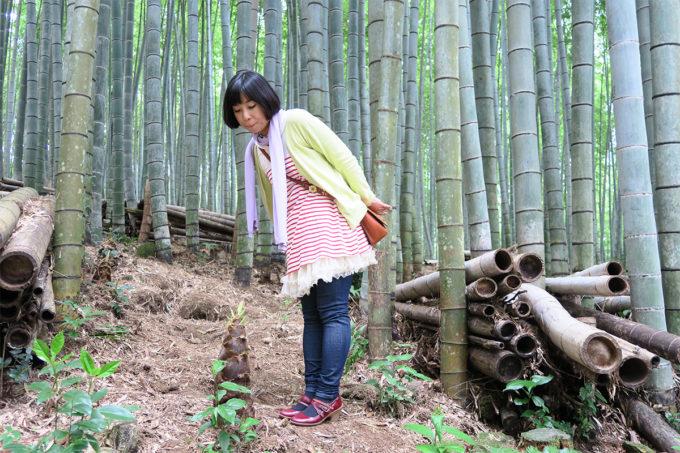 54_武雄神社だけに竹を見ています