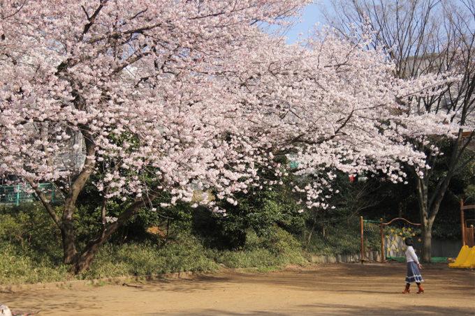 鷺沼お花見ピクニック2015-27