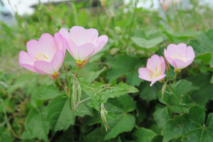 15_お花を眺めながら