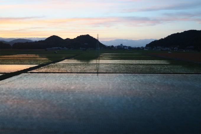 22_水田に映る夕日が綺麗すぎる