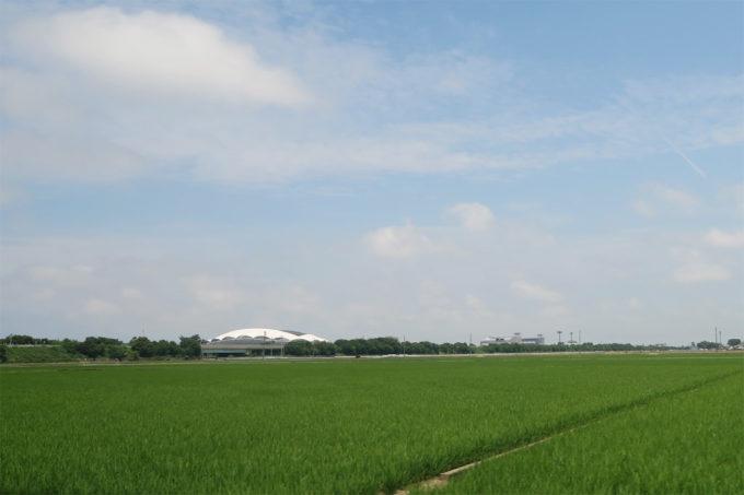 43_美しい水田