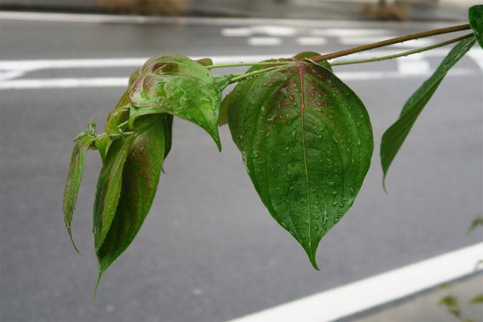 01_梅雨ですね