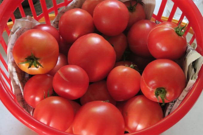 03_トマトをもらったり