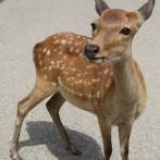 19_かわいい鹿ちゃん