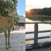 午後からの奈良観光ガイド ~ 奈良公園で鹿とふれあい、橿原神宮で神とふれあう。