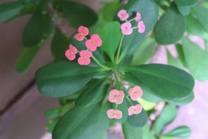 15_ピンクのカワイイお花
