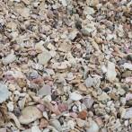 24_砂浜じゃなく…全部貝だ