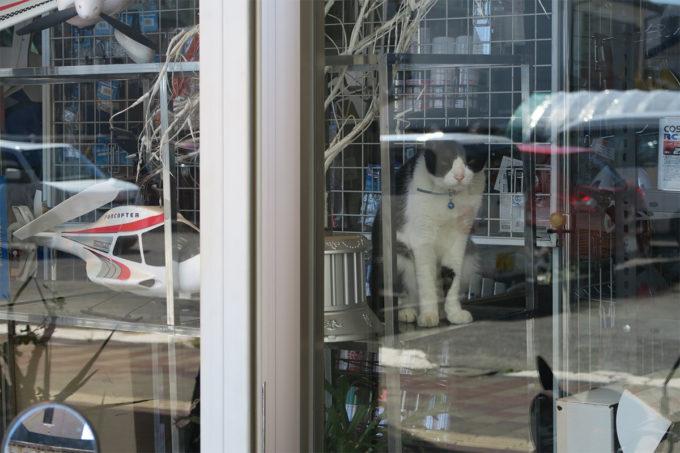 16_ショーケースの猫