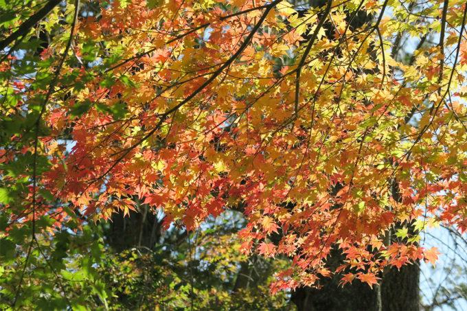 28_紅葉も綺麗