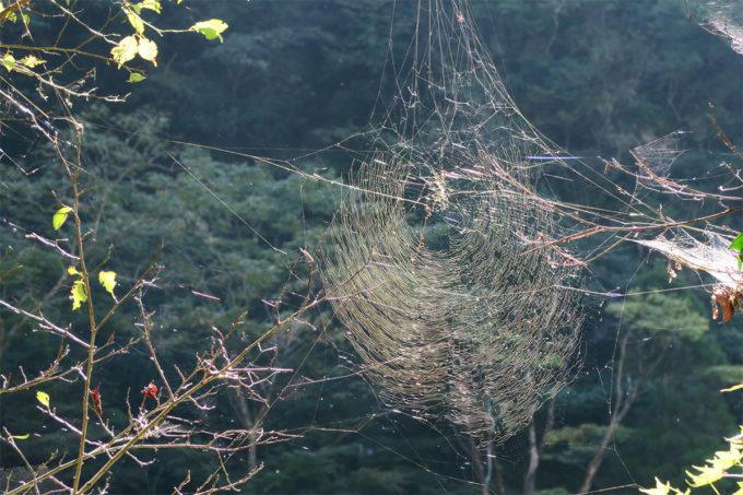 48_輝ける蜘蛛の巣