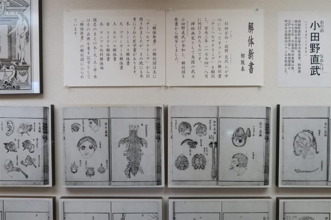 24_小田野直武さんの解体新書の挿絵