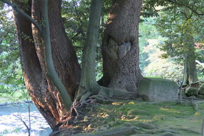 39_ハートの樹の幹
