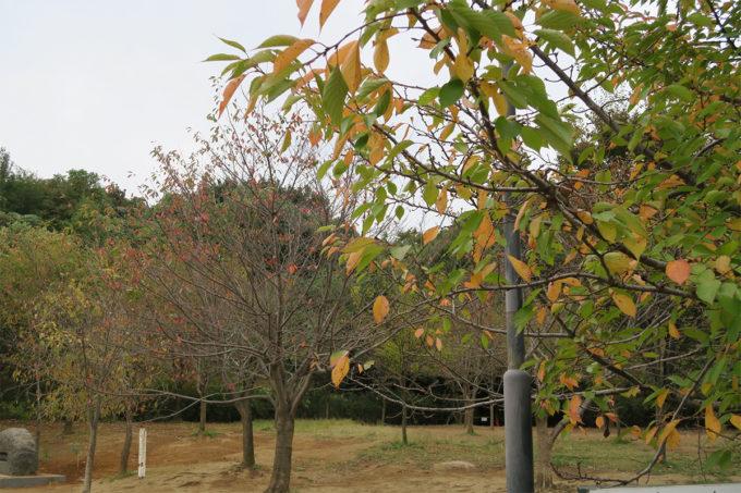 01_近所の紅葉