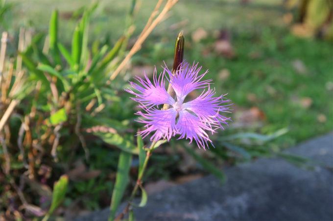 26_ピンクのお花