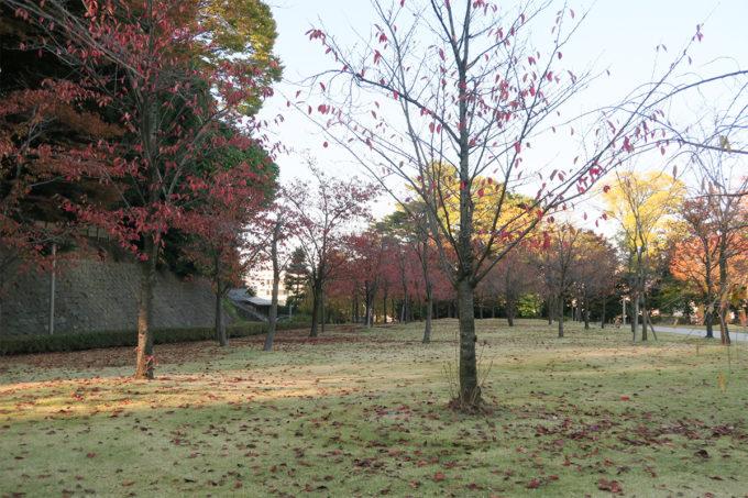 28_紅葉とお庭