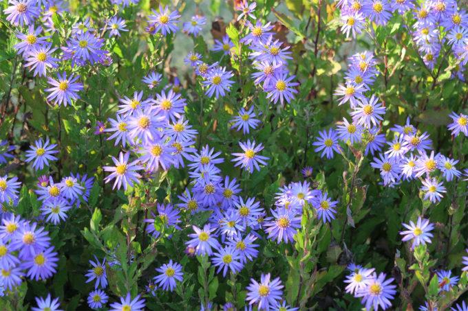 25_紫のお花