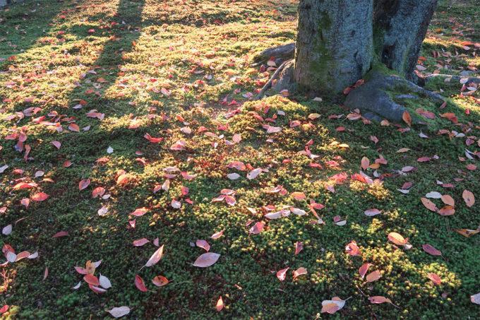 38_落ちた葉も綺麗
