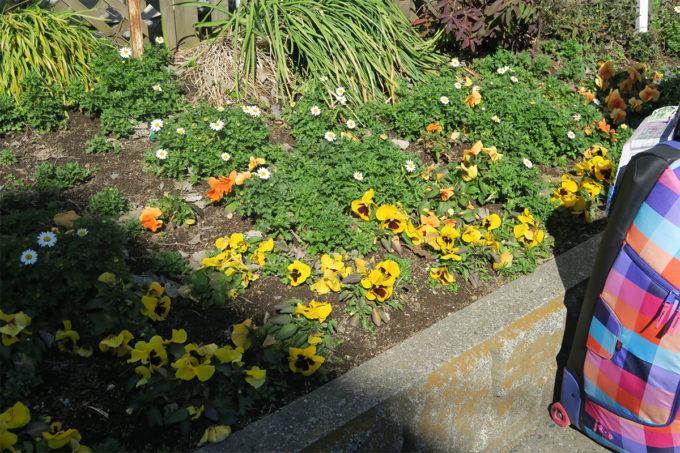 指扇駅の花壇は春の気配